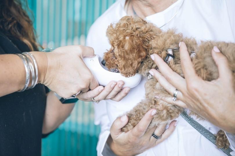 Tierheilpraktiker-Ausbildung